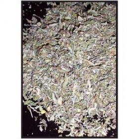 Дамиана (Turnera diffusa)