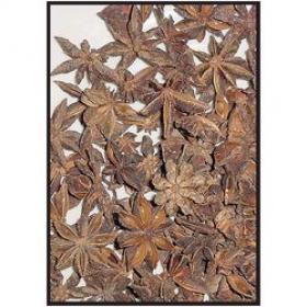 Звездчатый анис (Illicium verum)